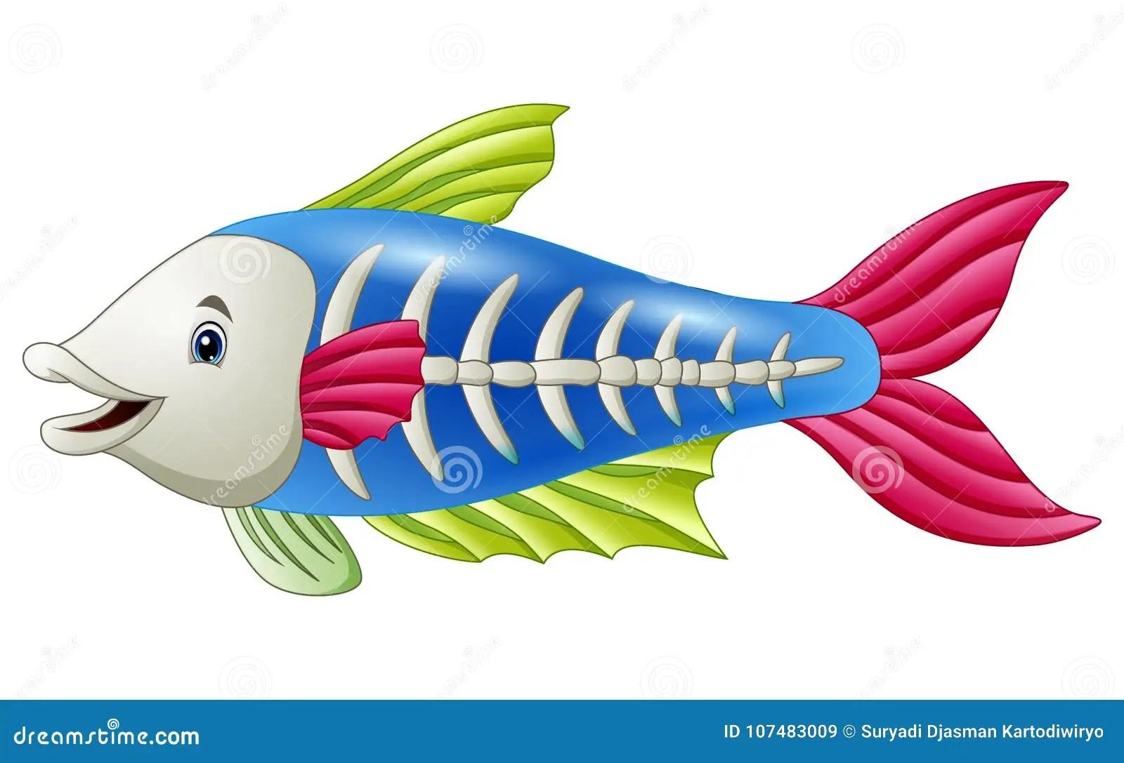 Cute X Ray Fish Cartoon Stock Vector Illustration Of