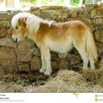 Cute Small Horse In Stables Stock Photo Image Of Elegance Equestrian 45331116
