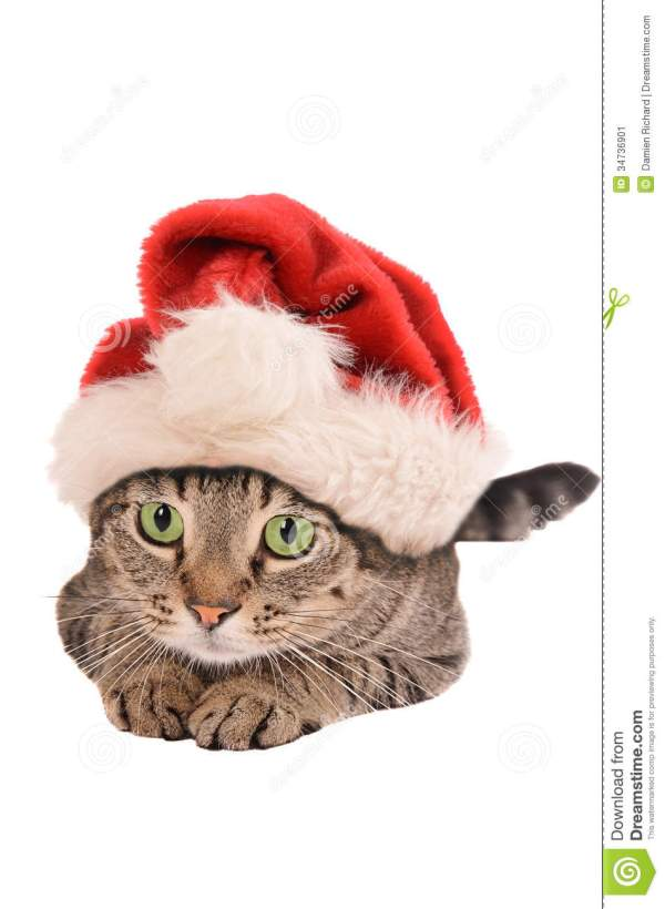Cute Cat with Christmas Hat