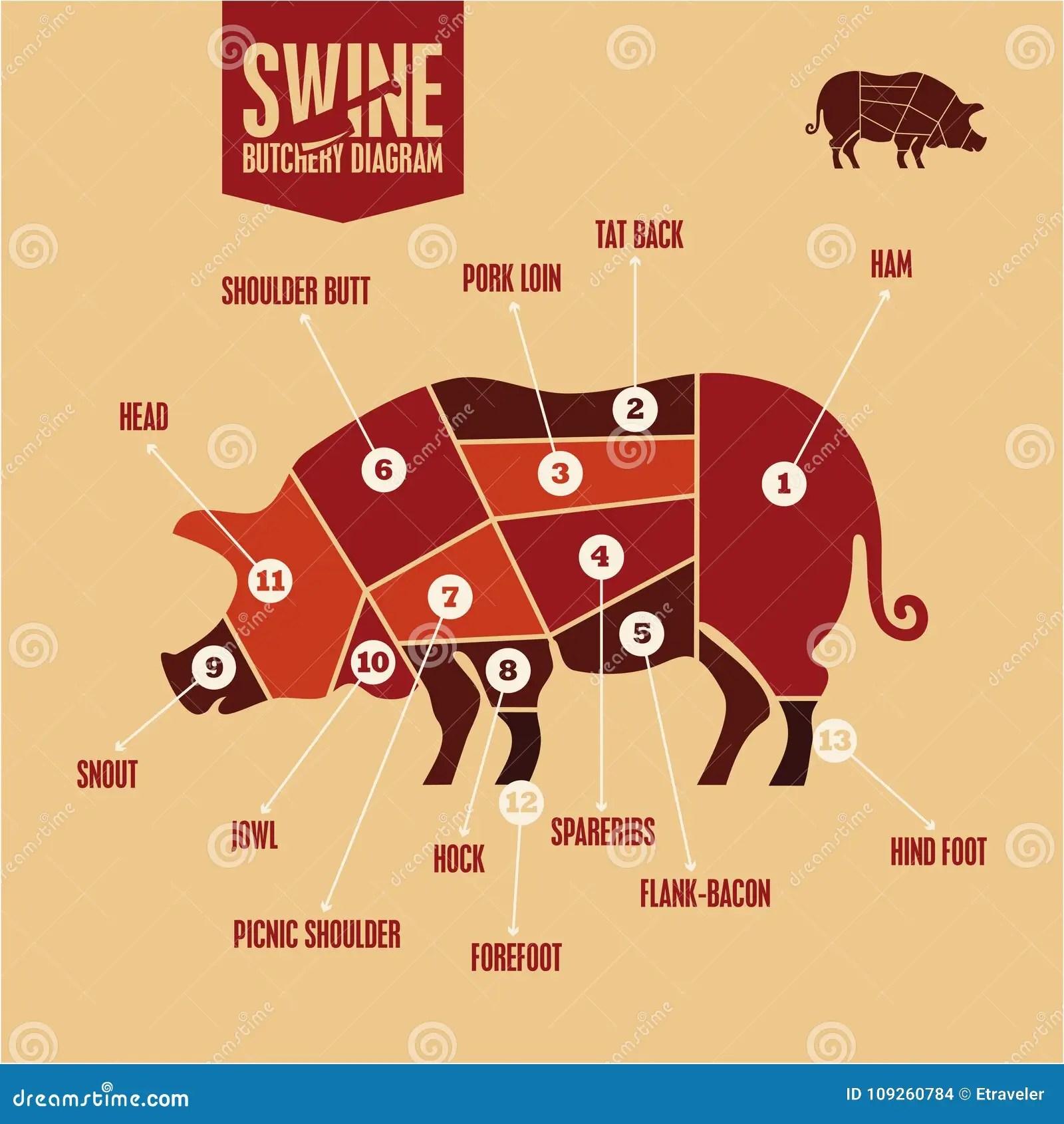 pork butcher cuts diagram 2004 volkswagen jetta wiring of in color swine butchery barbecue meat