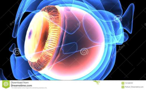 small resolution of 3d illustration of human body eye anatomy