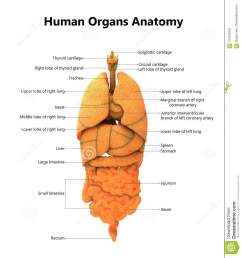 3d illustration of human body organs anatomy with detailed labels [ 1219 x 1300 Pixel ]