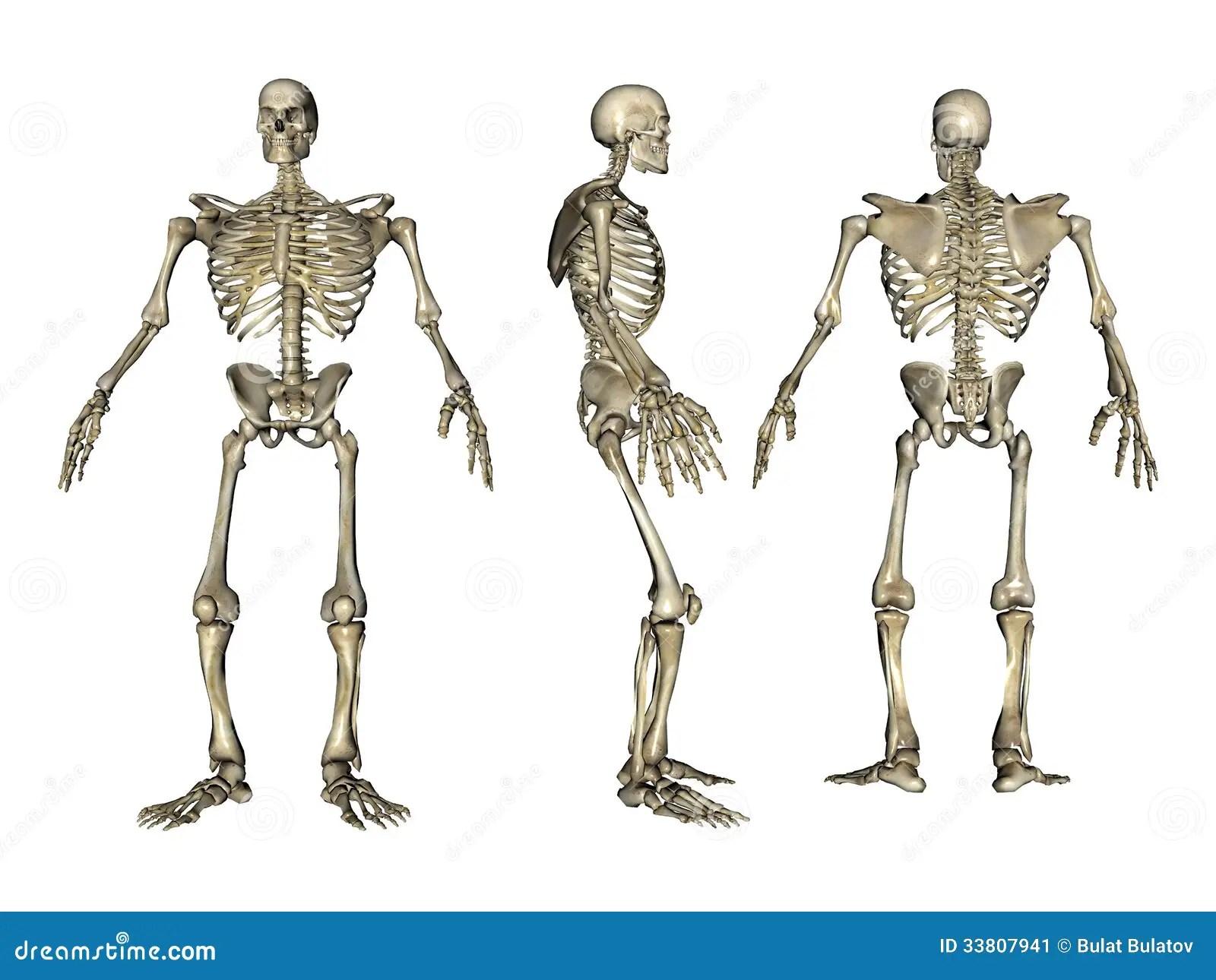 3d Rendered Skeleton Stock Illustration Illustration Of Power