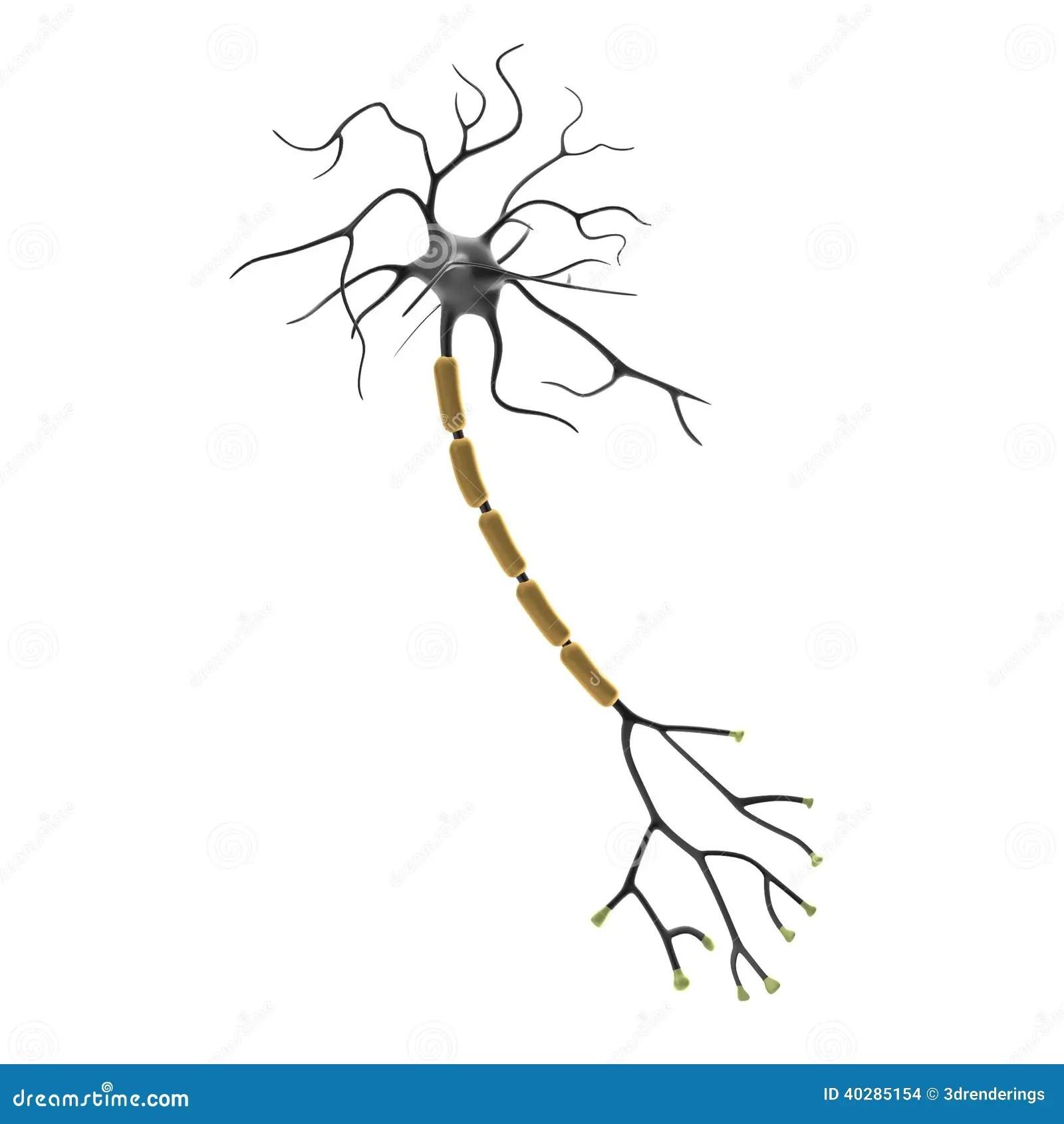 3d Rendono Del Neurone Illustrazione Di Stock