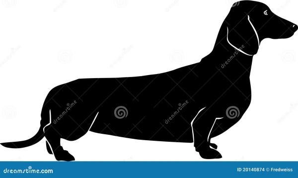 dachshund illustration stock vector