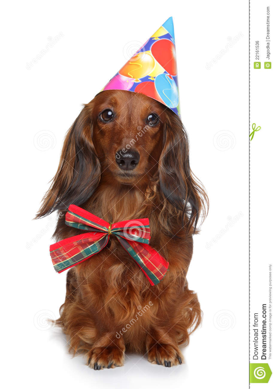 Dachshund In Party Hat On A White Background Royalty Free