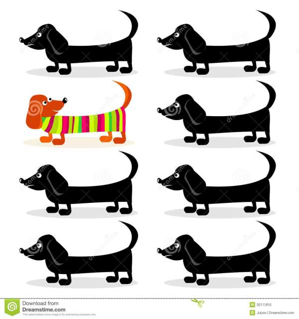 dachshund - differently stock