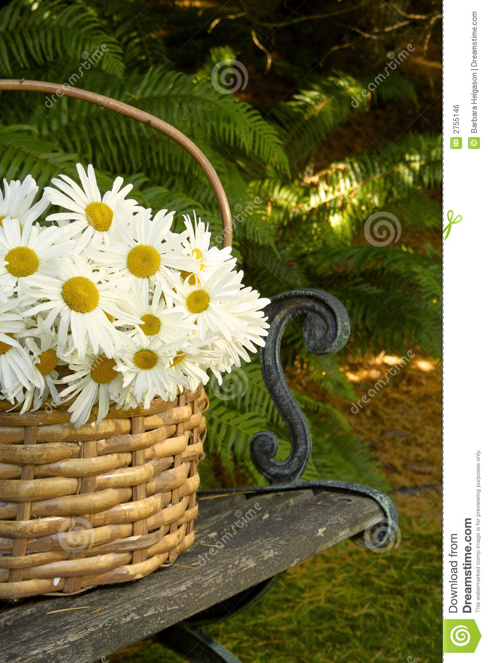 Daisy Basket Royalty Free Stock Image  Image 2755146
