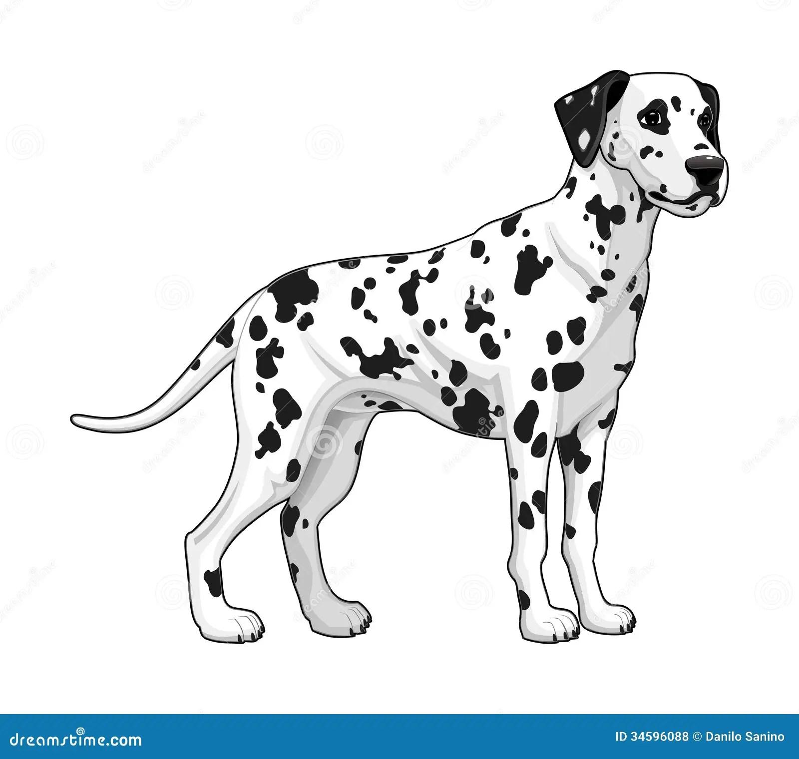 Dalmatian Stock Vector Image Of Young Pedigree Tail
