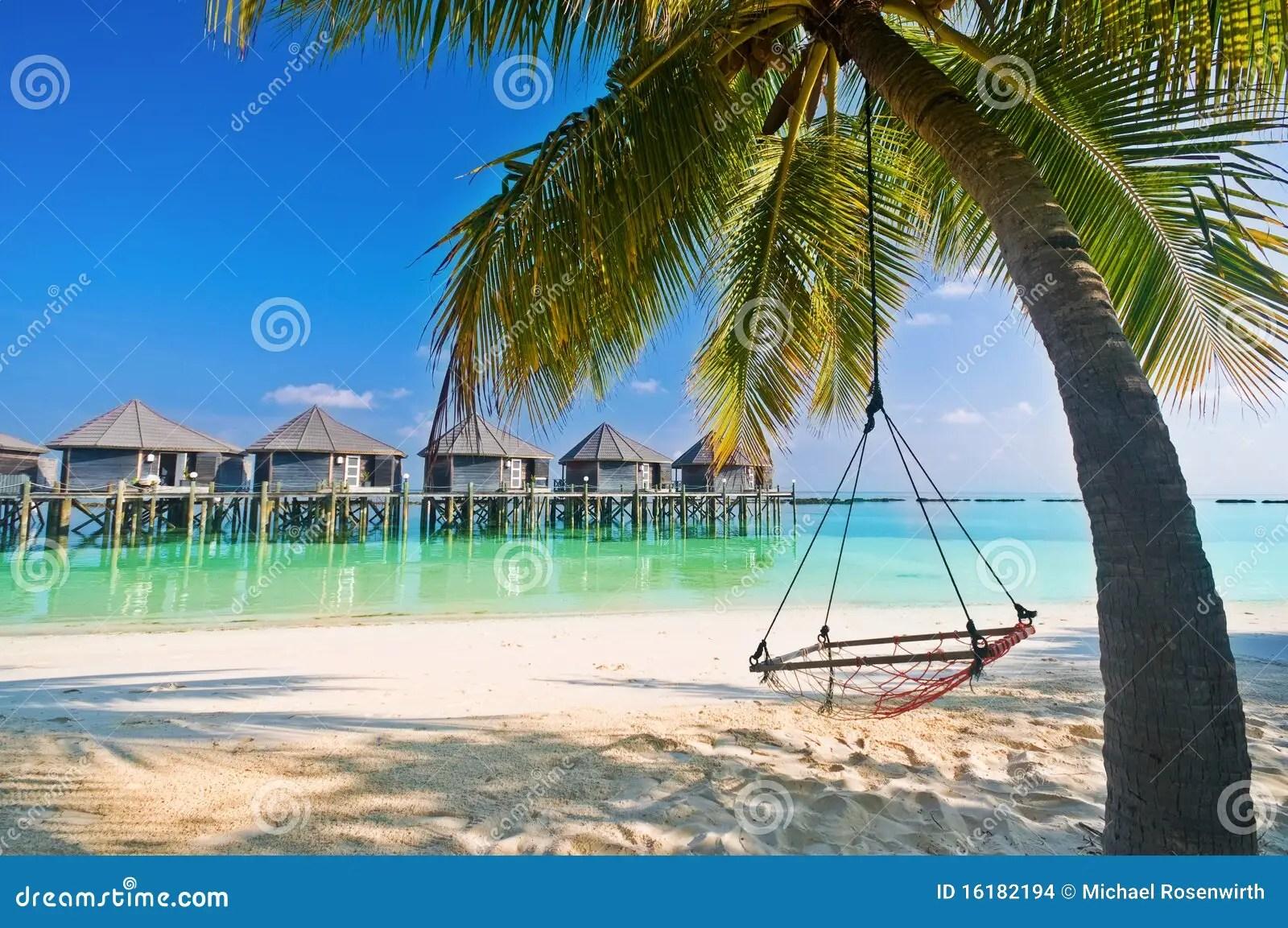 De Hangmat Van Het Strand Onder Palmen Stock Foto