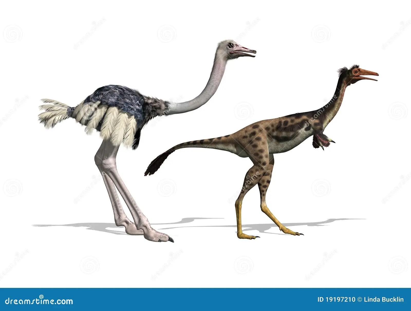 ostrich skeleton diagram car air conditioning system de vergelijking van struisvogel en dinosaurus