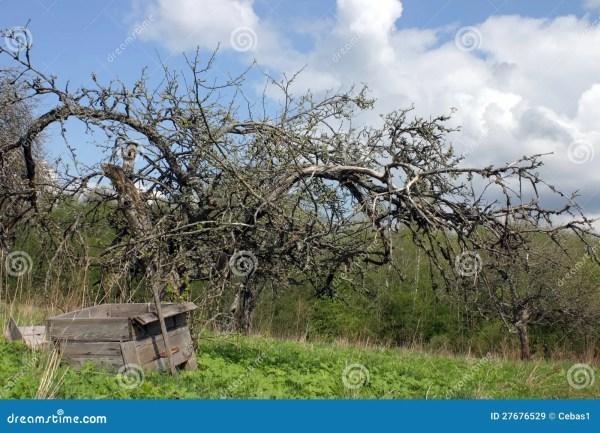 dead landscape royalty free stock