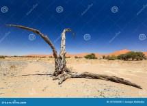 Dead Tree In Sossusvlei Sesriem Famous Namib