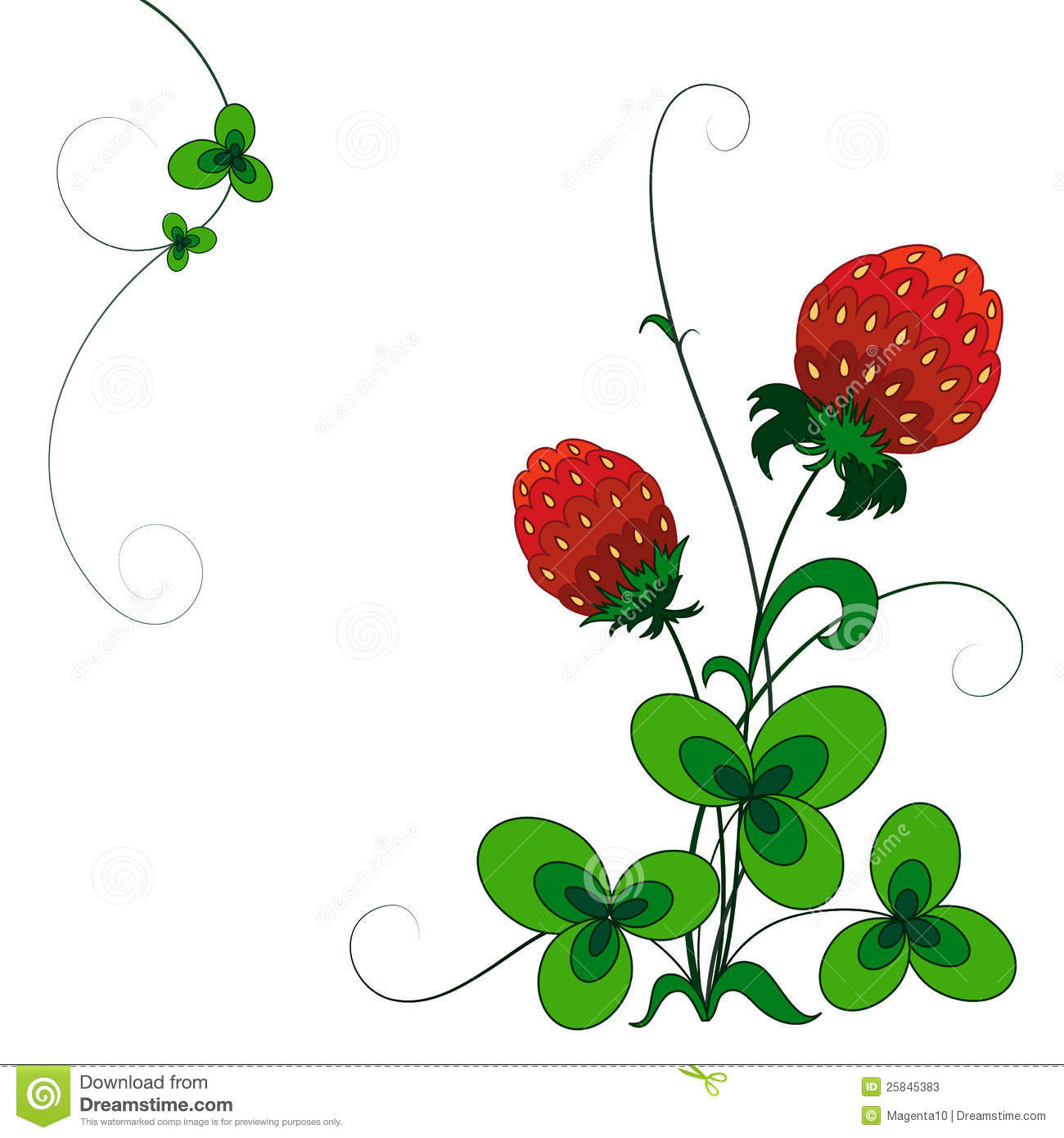 hight resolution of decorative strawberry bush