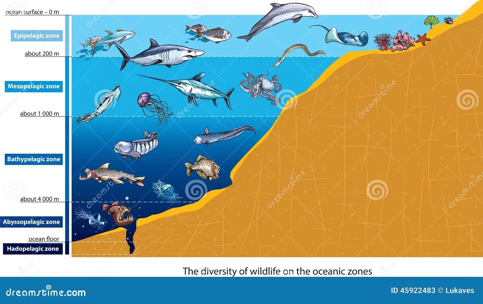 Deep Sea Creatures Stock Vector