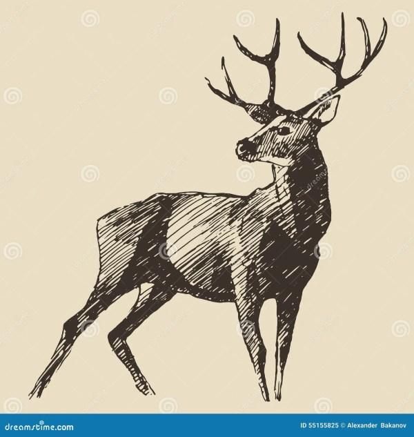 Deer Engraving Vintage Illustration Vector Stock