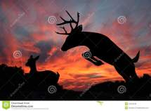 Deer Sunset - Whitetail Doe And Leaping Buck Stock
