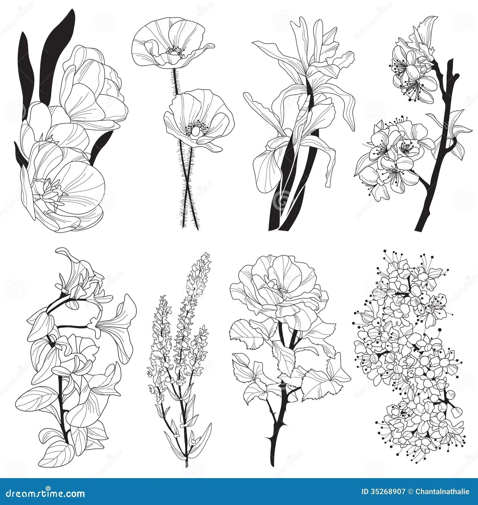 Dekorativa Blommor Vektor Illustrationer Illustration Av