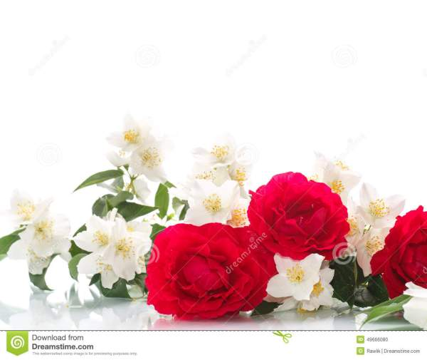Delicate Bouquet Of Roses And Jasmine Stock Photo Image