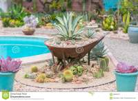 Desert garden agave stock photo. Image of group, agave ...