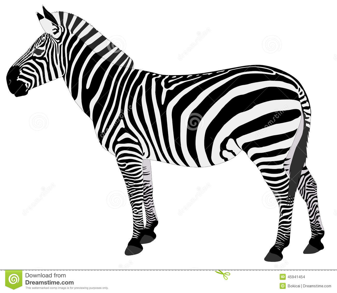Detailed Illustration Of Zebra Stock Vector