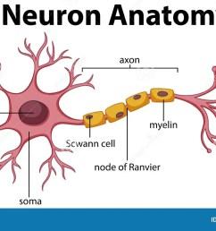 neuron diagram [ 1300 x 760 Pixel ]