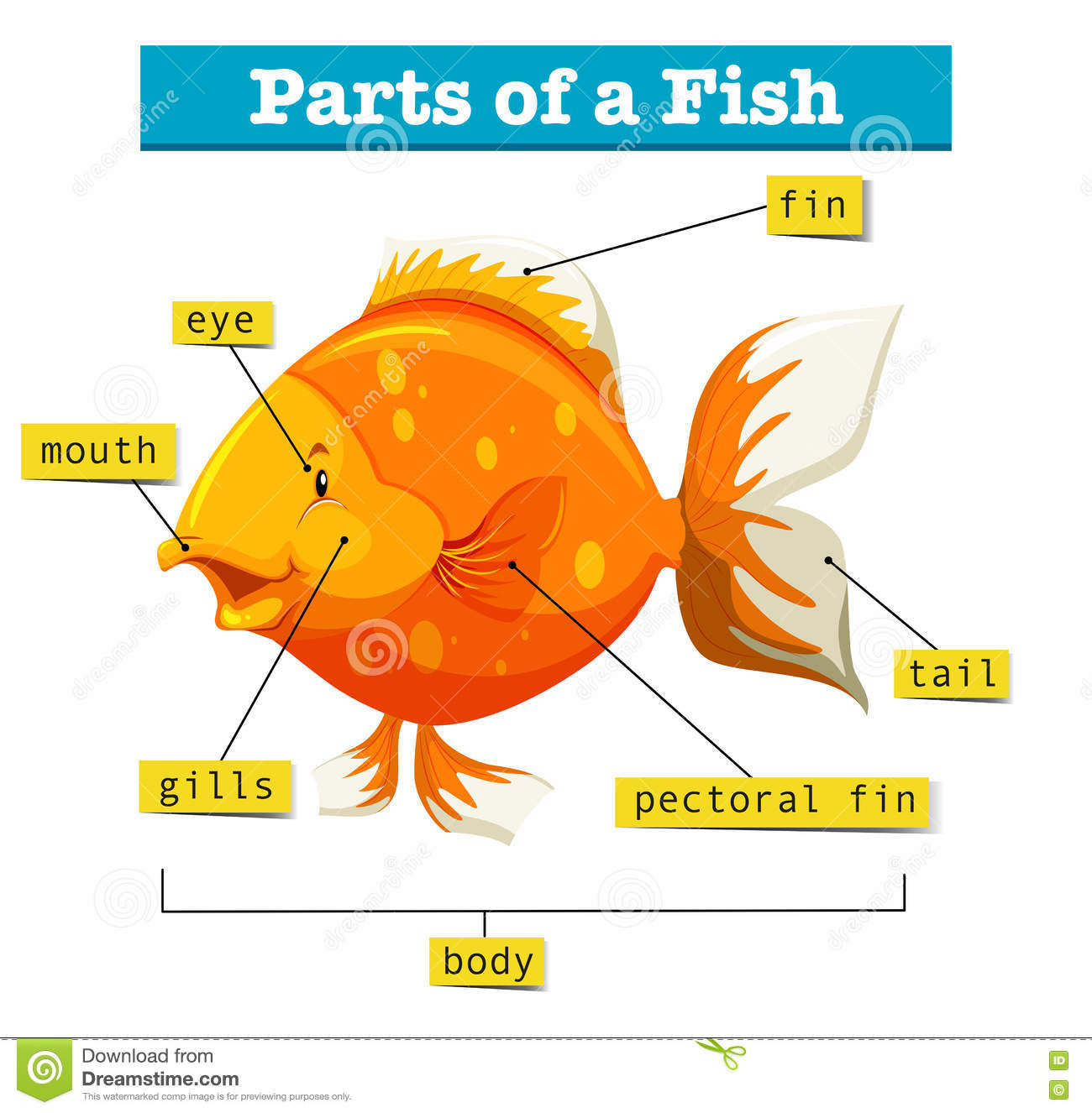 hight resolution of diagram with parts of fish