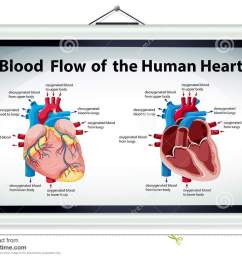 diagram showing blood flow in human heart [ 1300 x 995 Pixel ]