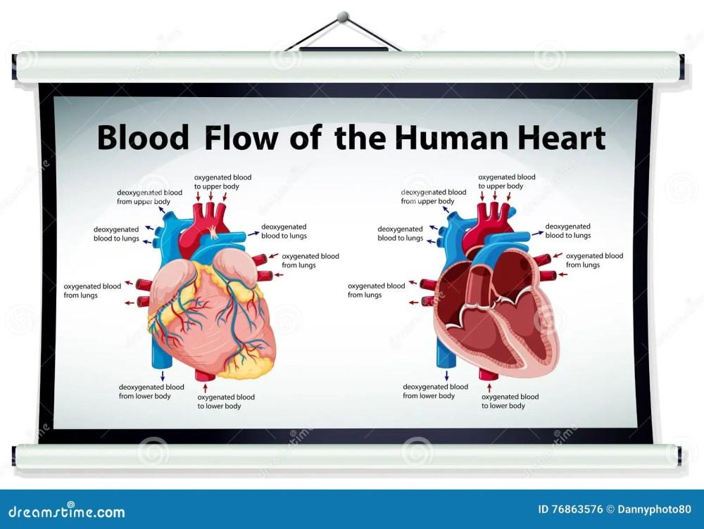 medium resolution of diagram showing blood flow in human heart