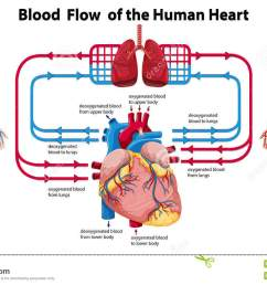 diagram showing blood flow of the human heart [ 1300 x 839 Pixel ]