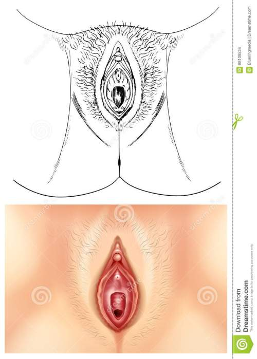 small resolution of diagram showing female vagina