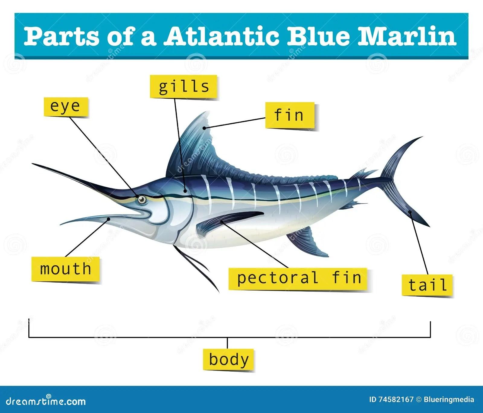 Whale Shark Anatomy Diagram