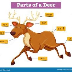 Deer Skeleton Diagram Radio Wiring For 2002 Chevy Silverado Hoof Anatomy Blood Elsavadorla