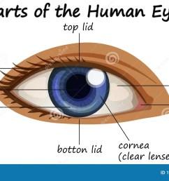 diagram showing parts of human eye [ 1300 x 804 Pixel ]
