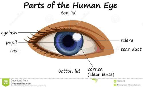small resolution of diagram showing parts of human eye