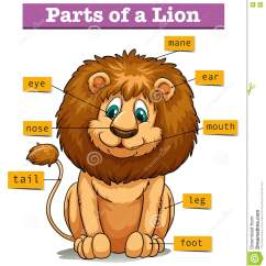 Lion Life Cycle Diagram Dvc Speaker Wiring Showing Parts Of Stock Vector Illustration