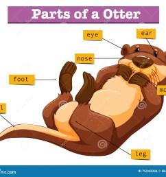diagram showing parts of otter [ 1300 x 1119 Pixel ]
