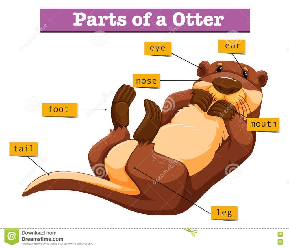 medium resolution of diagram showing parts of otter