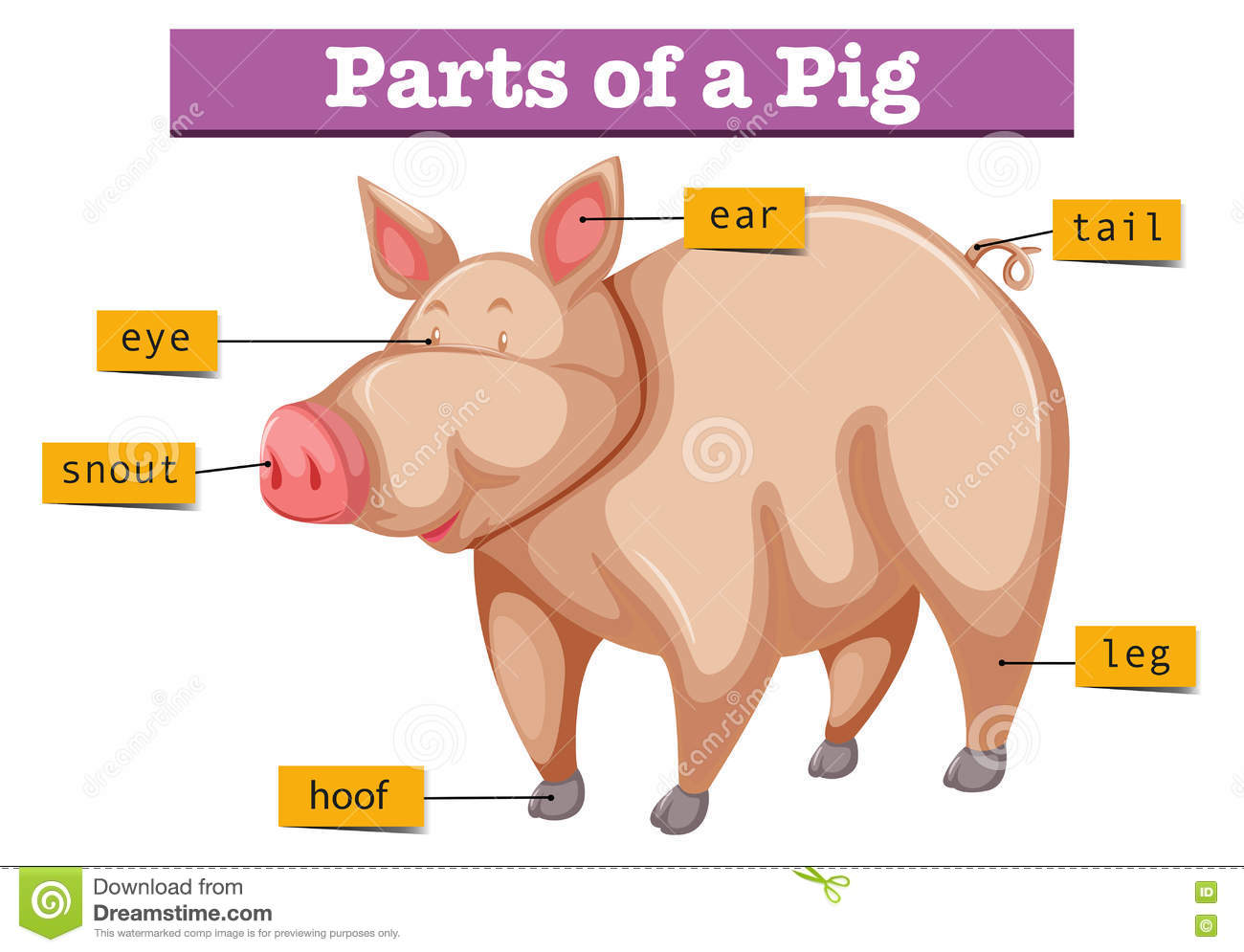 Diagram Showing Parts Of Pig Stock Vector