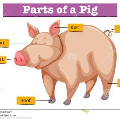 4 H Pig Diagram Way Switch Wiring Diagrams 3 Switches Parts Of A Pictures To Pin On Pinterest