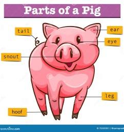 diagram showing parts of pig illustration [ 1300 x 1326 Pixel ]
