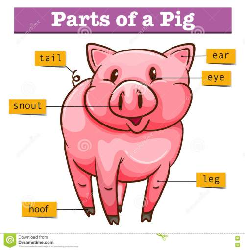 small resolution of diagram showing parts of pig illustration