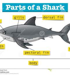 diagram showing parts of shark [ 1300 x 1057 Pixel ]