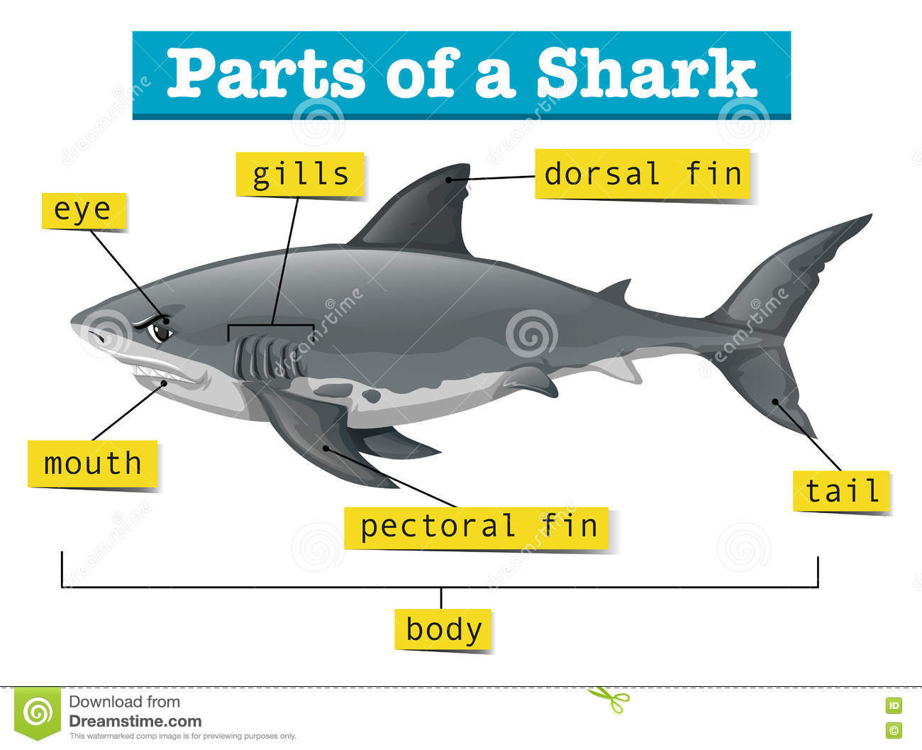 hight resolution of diagram showing parts of shark