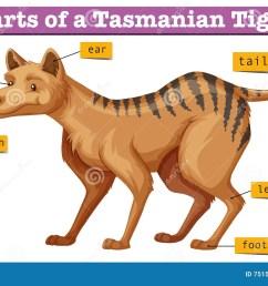 diagram showing parts of tasmanian tiger illustration [ 1300 x 900 Pixel ]