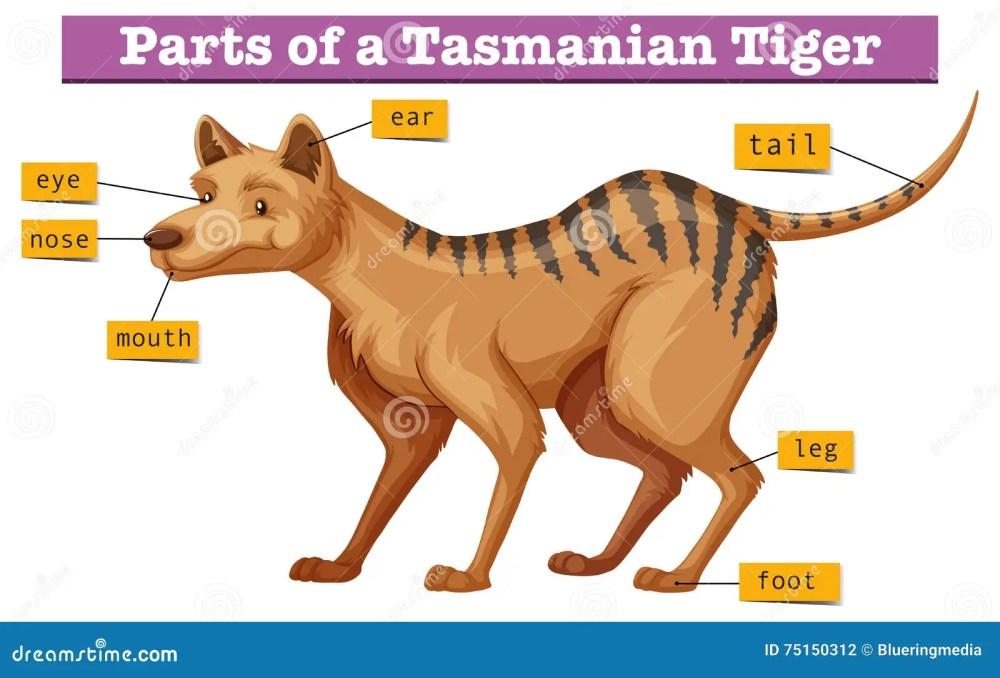 medium resolution of diagram showing parts of tasmanian tiger illustration
