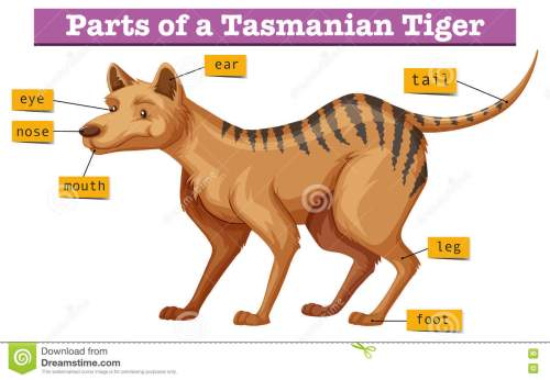 small resolution of diagram showing parts of tasmanian tiger illustration