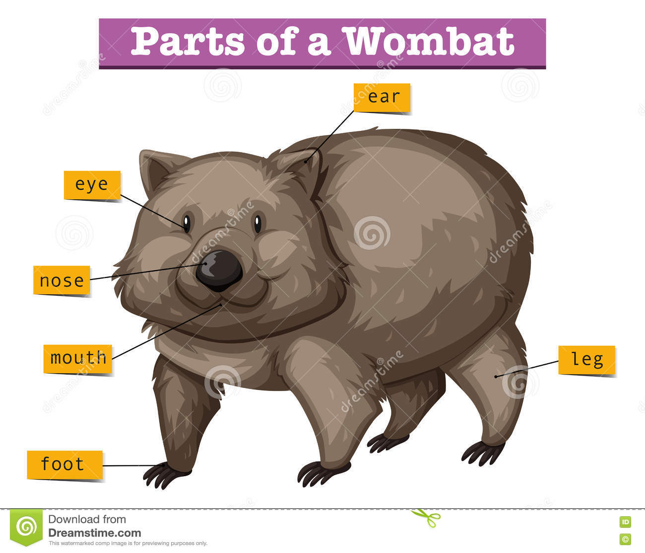 hight resolution of diagram showing parts of wombat
