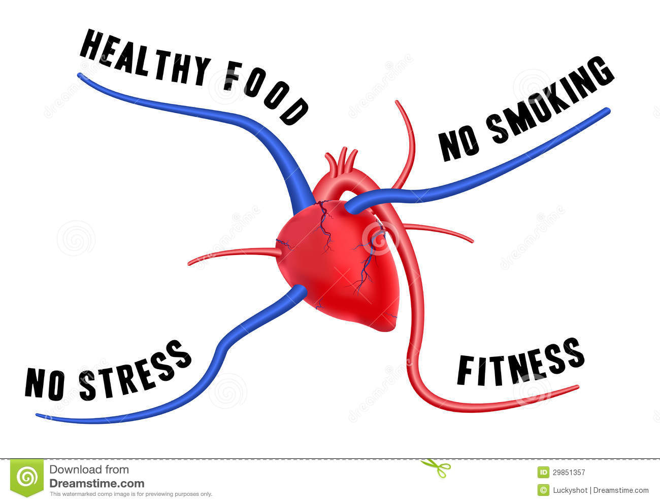 healthy heart diagram tv tuner card connection a stock vector image of cure artery
