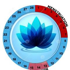 Menstrual Cycle Diagram With Ovulation Chicago Electric Arc Welder 120 Wiring Diagramme Bleu De Menstruel Avec La Fleur Illustration Vecteur - Image: 38558925